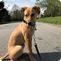 Adopt A Pet :: Tater - Rockville, MD