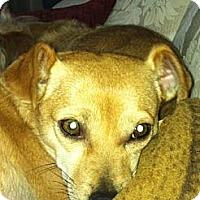 Adopt A Pet :: Travis - Rescue, CA