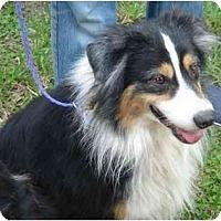 Adopt A Pet :: Stryker - Orlando, FL