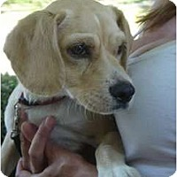 Adopt A Pet :: Rex - Lake Forest, CA