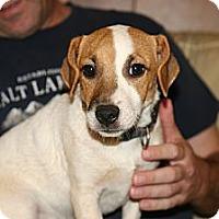 Adopt A Pet :: Leo - hartford, CT