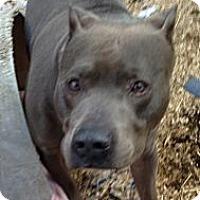 Adopt A Pet :: Nitro - Wanaque, NJ