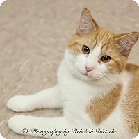 Adopt A Pet :: Twix - Byron Center, MI