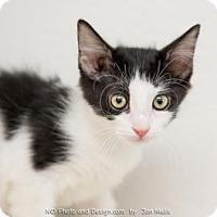 Adopt A Pet :: Willow - Fountain Hills, AZ