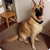 Adopt A Pet :: Hildi - Ormond Beach, FL