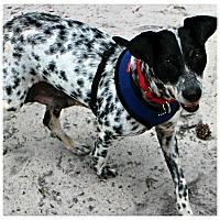 Adopt A Pet :: Endora - Forked River, NJ