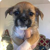 Adopt A Pet :: Harry - Brea, CA