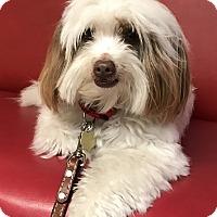 Adopt A Pet :: Digby - Los Angeles, CA