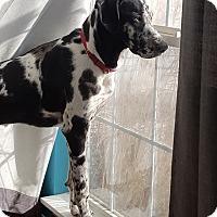 Adopt A Pet :: Jade - St. Louis, MO