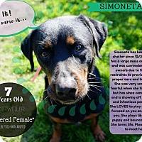 Adopt A Pet :: simonita - valley center, CA