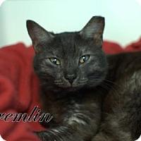 Adopt A Pet :: Gremlin Girl - Middleburg, FL