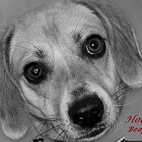 Adopt A Pet :: Holly - Salem, WV
