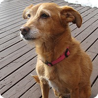 Adopt A Pet :: Beya - Rigaud, QC
