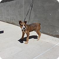 Adopt A Pet :: A14 Hugs - Odessa, TX