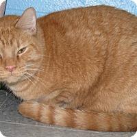 Adopt A Pet :: Cadbury - New Kensington, PA