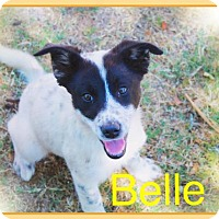 Adopt A Pet :: BELLE - Princess Puppy! - Chandler, AZ