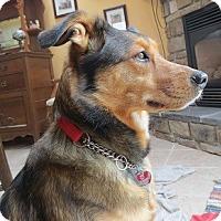 Adopt A Pet :: Rin - Hamilton, ON