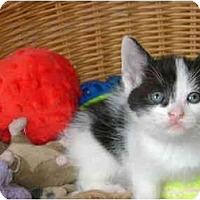 Adopt A Pet :: b/w boy - Etobicoke, ON