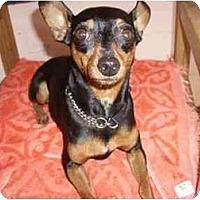 Adopt A Pet :: Buster - Phoenix, AZ