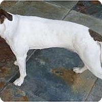 Adopt A Pet :: DOBY - Scottsdale, AZ