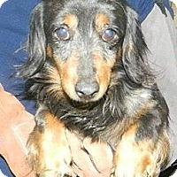 Adopt A Pet :: Abe - MD - Jacobus, PA