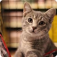 Adopt A Pet :: Dax - Sacramento, CA