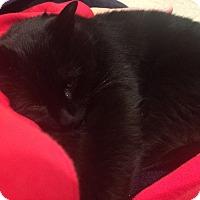 Adopt A Pet :: Eclipse - Ogallala, NE