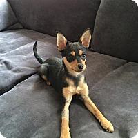 Adopt A Pet :: Valentina - Oceanside, CA