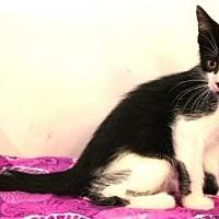 Adopt A Pet :: Tazzy - Sebastian, FL
