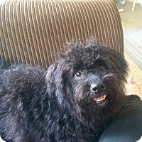 Adopt A Pet :: HONEY - Boca Raton, FL
