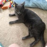 Adopt A Pet :: Dusty - Delmont, PA
