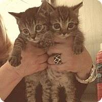 Adopt A Pet :: Gwen and Rory - Whitestone, NY