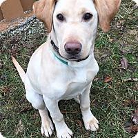 Adopt A Pet :: Dom - Pleasant Plain, OH