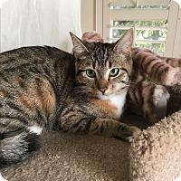 Adopt A Pet :: Bridgette - El Dorado Hills, CA