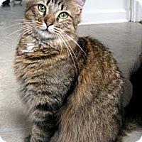 Adopt A Pet :: Caz - Alexandria, VA