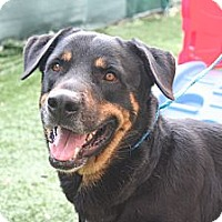 Adopt A Pet :: Apollo - Seffner, FL