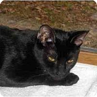 Adopt A Pet :: Dawn - Richmond, VA
