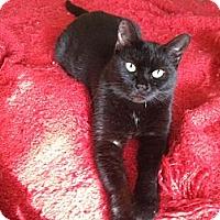 Adopt A Pet :: PJ - Xenia, OH