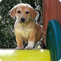 Adopt A Pet :: Snickers - Staunton, VA