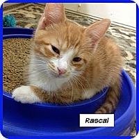 Adopt A Pet :: Rascal - Miami, FL