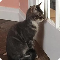 Adopt A Pet :: Dash - East Hanover, NJ