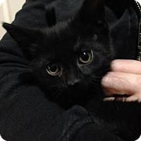 Adopt A Pet :: Riku - Hamilton, ON