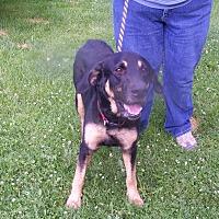 Adopt A Pet :: Byron - Lake Orion, MI
