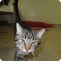 Adopt A Pet :: Leo - Medina, OH