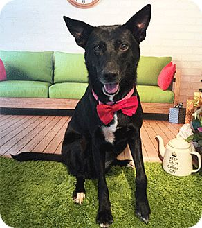 Labrador Retriever Mix Dog for adoption in Castro Valley, California - Lotus
