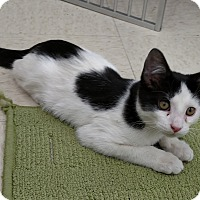 Adopt A Pet :: Frankie - Warren, OH