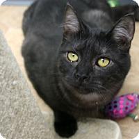 Adopt A Pet :: Bugsy - Republic, WA
