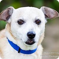 Adopt A Pet :: Orson - Westminster, CA