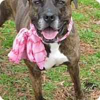 Adopt A Pet :: Modesty - Voorhees, NJ