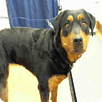 Adopt A Pet :: Diamond - Tracy, CA